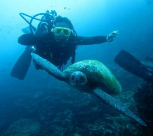diving-with-galapagos-sea-turtles